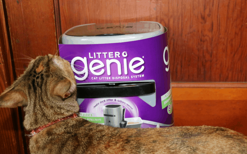 7 Essentials for Every Cat Owner