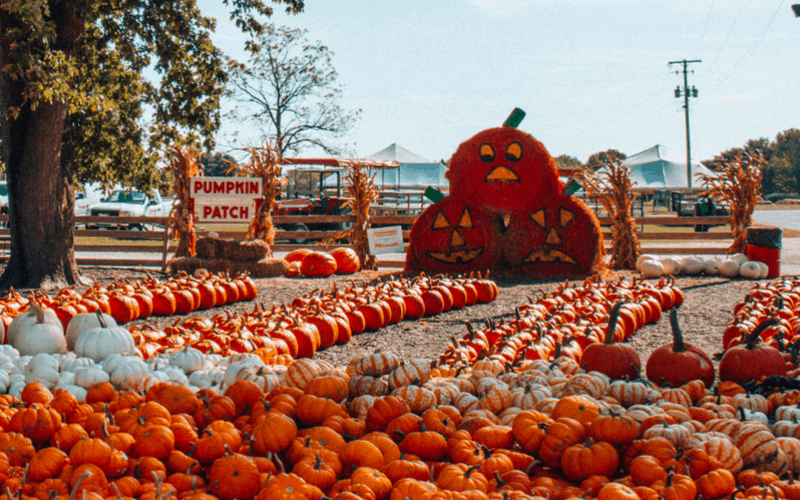 Make the Most of Fall at Young's Dairy